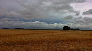 tormenta-ldd