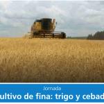 trigo-cebada ldd