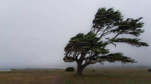 viento